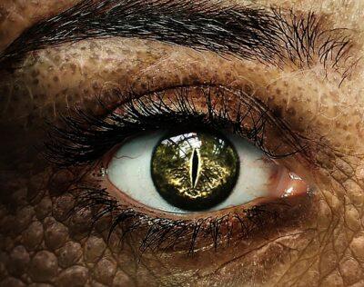San och draken Saxon – Den nya tidens andliga vägledare